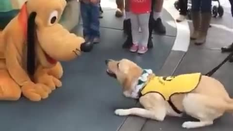 This Service Dog Is Incredibly Happy To Meet Pluto At Disneyland