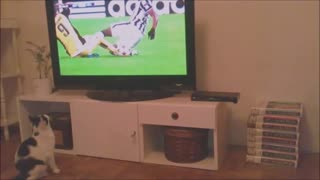 Sport-loving cat intensely watches soccer game - Video