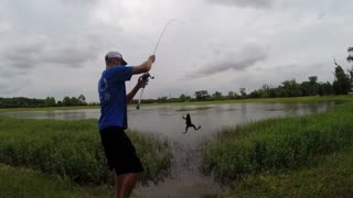 How to catch bullfrogs - Video