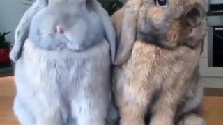 Sweet bunnies Cute animals - Video