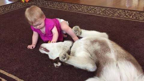 Baby and husky share precious playtime moment