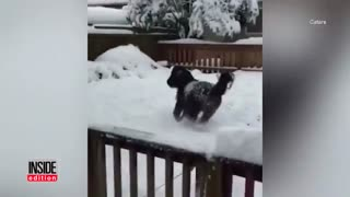 Meet Hal – The Miniature Horse Who LOVES SNOW! - Video