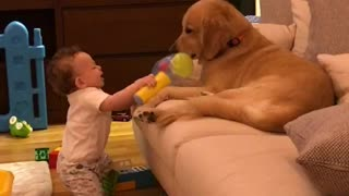 Patient Dog Lets Baby Hit Him With A Soft Hammer Toy