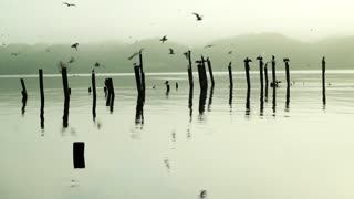 Birds on Wood (Free to Use HD Stock Video Footage)