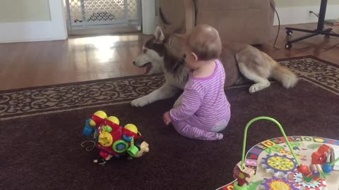 Adorable compilation of Husky and baby playtime