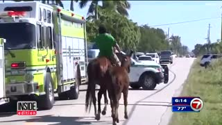 (VIDEO) Must Watch: Stranded Horse Rescued From Deep Ditch! - Video