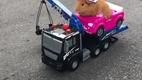 Guinea pig tow truck