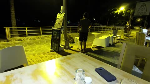 Bull sea lion evicted after causing a scene at beachfront restaurant