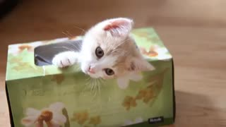 Kitty in a box, so cute! - Video