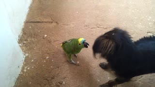 Parrot Plays with Dog - Video