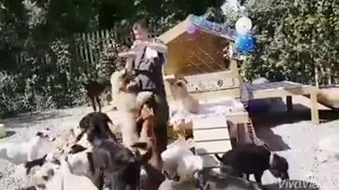 Doggie birthday party