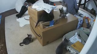 Kittens Play on Boxes