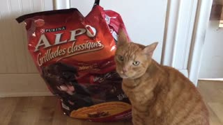 Affectionate cat can't resist snuggling with bag of food - Video