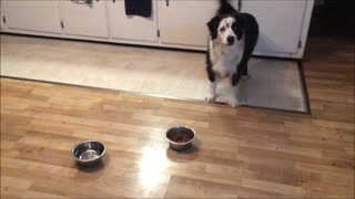 Quirky dog has sudden and strange reaction to food bowl - Video