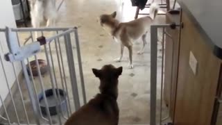Canine Quintet - Video