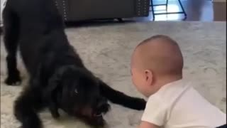 funny kid and dog games # funny video