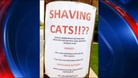 Mystery in Virginia: Someone is shaving other people's cats