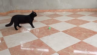 A cat playing ball, pretty cat