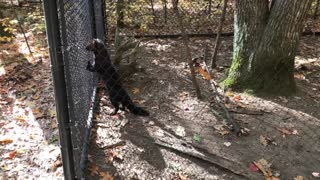 Maine Day 2 – Maine Wildlife Park - Video