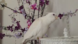 "Bird flawlessly sings ""If You're Happy and You Know It"""