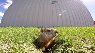 The most adorable Groundhog Day fail ever - Video