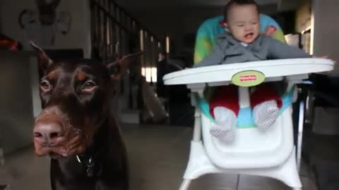 Doberman complains about his dinner
