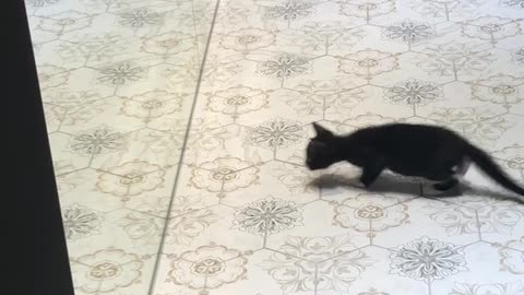 Kitten Faces Off in a Mirror Match