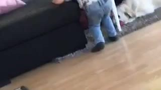 Baby boy throws toy for dog to go fetch but falls over dog