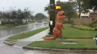 Hurricane Harvey Brought the T-Rex - Video
