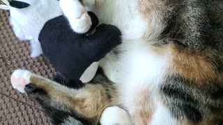 Cat Falls Asleep With Her Stuff Animal