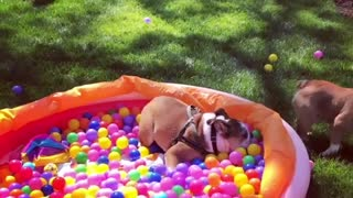 Bulldog birthday party is the best party ever