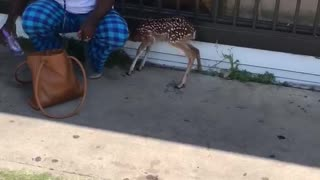Bambi in the Hood - Video