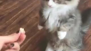 Her little happy paws - Video
