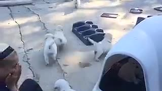 Liter of puppies chase after their mother in a backyard