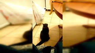 Cat with banana #cat and banana - Video