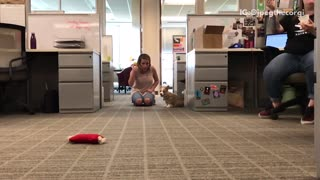 Tan dog chases yellow ball in office - Video