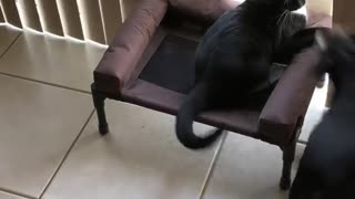 Cat decides he wants to sleep in dog's bed!