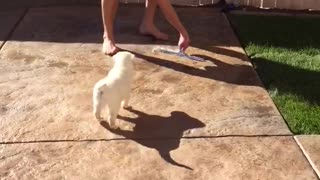 Golden retriever following water as owner pushes it away