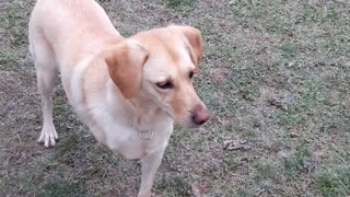 Zuja in dog park  - Video