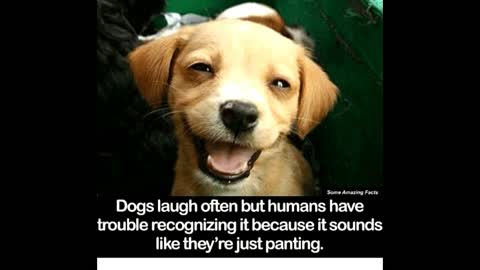 Amazing facts about Dogs video!!!!!