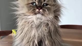 that what your cat  look like in the Morning - Video