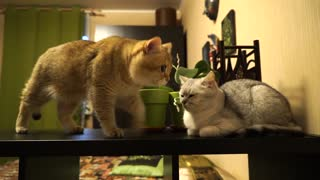 A day in the life of two adorable cats - Video