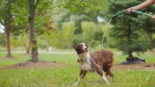Dog Playing with Garden hoses
