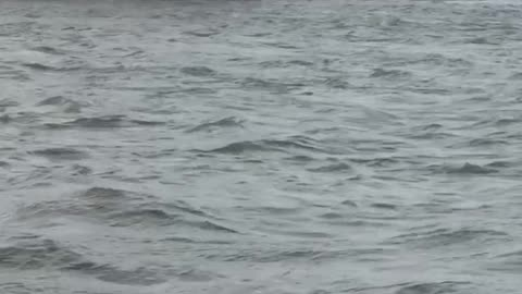 High Water Causes Trouble for Tugboat