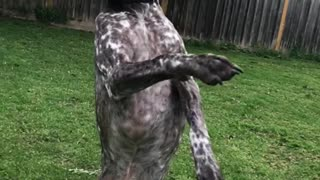 Dog catches duct tape
