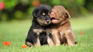 Two adorable puppies next to each other