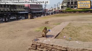 Monkey stole tourist water bottle