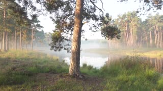No Copyright Background Nature Video
