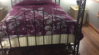 Custom made queen size bed. Schultz ornamental Iron