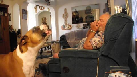 Dog Sings With Grandpa's Harmonica